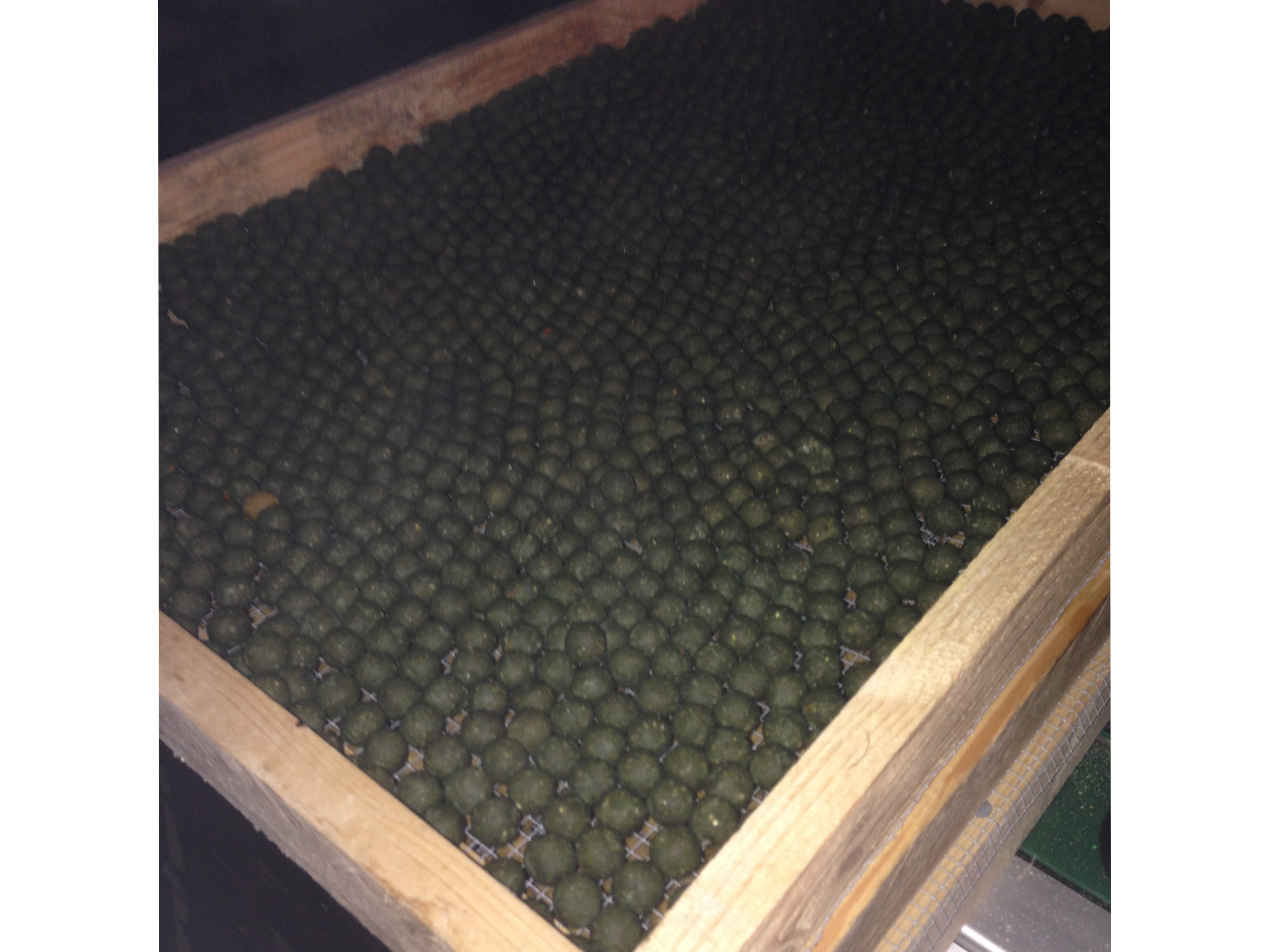 5kg of Musselberry drying out